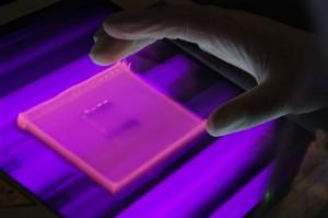 Markierte DNA im UV-Licht